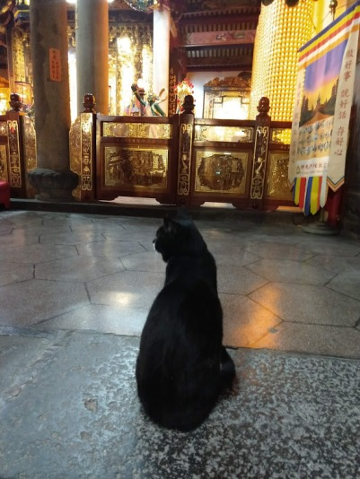 A black cat facing the interior of a brightly lit Temple.